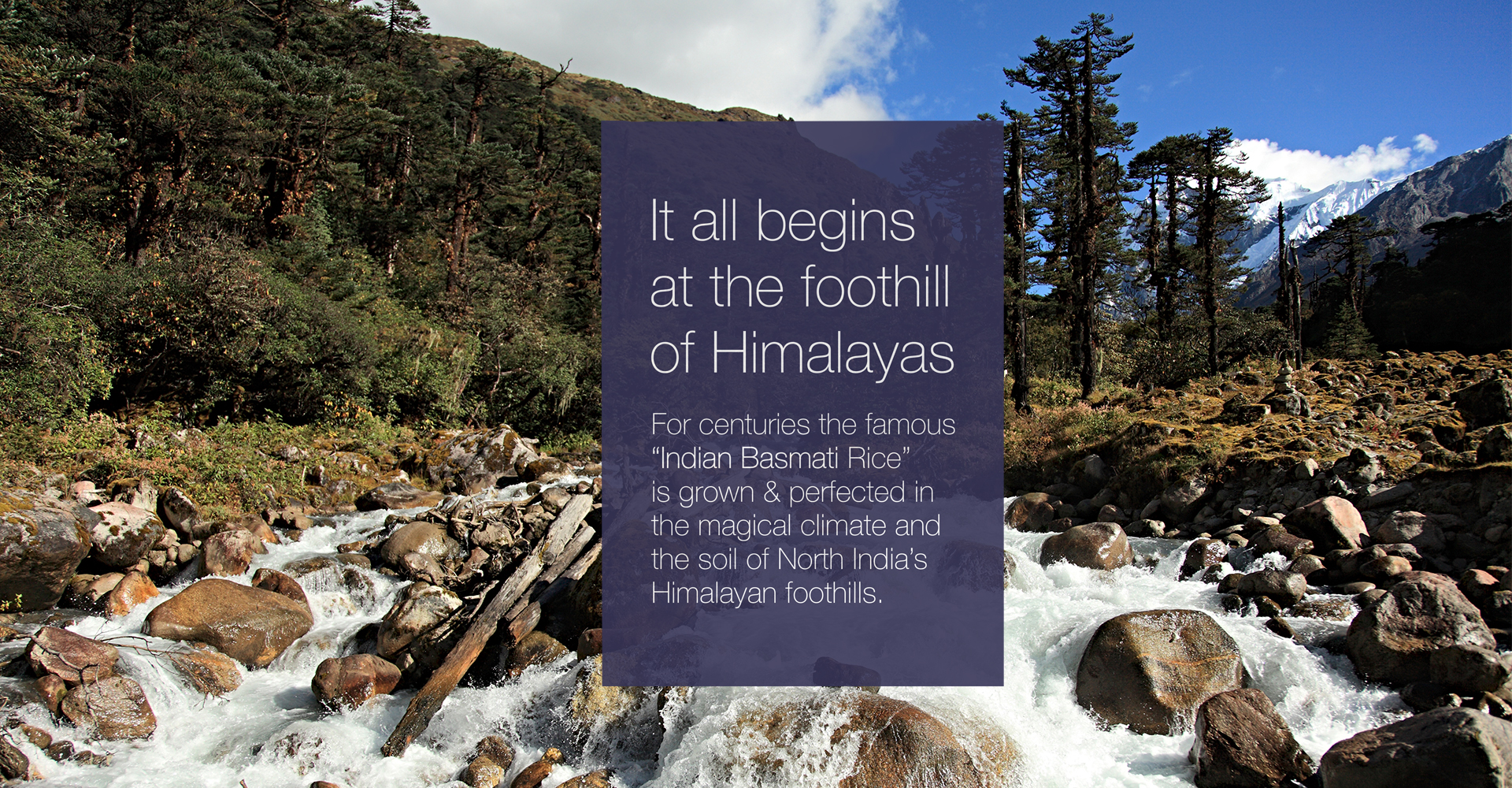 himalyas-foothills-rice